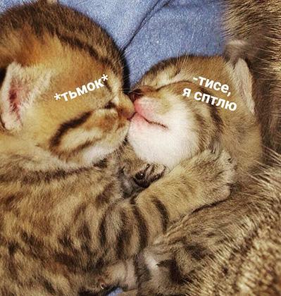 🐱 Котики - главные вдохновители мемов в социальных сетях, или откуда взялось