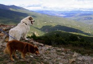 аиди в горах