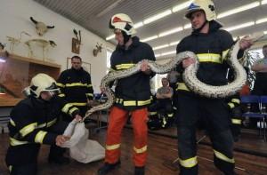 Американские пожарные спасли хомяков!