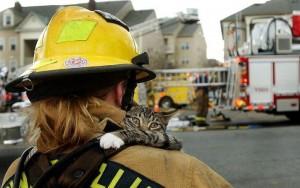 котика спасли