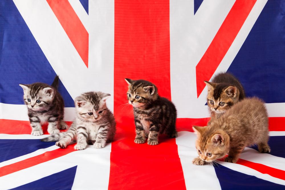 котики, британский флаг