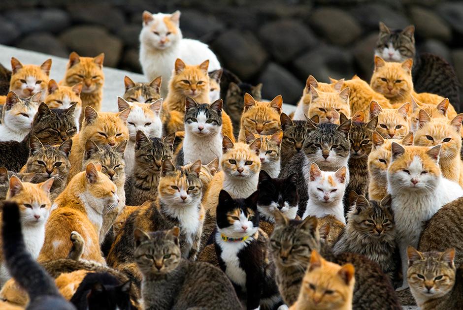 кошкис  острова Аосима