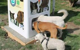 автомат для кормления бездомных животных Стамбул