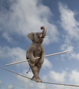 Дом престарелых слонов