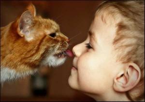 малыш и кошка
