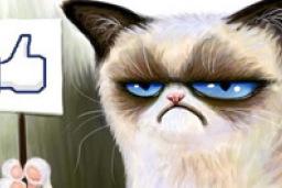 рисунок с сердитым котиком