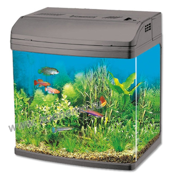 аквариум джебо 2
