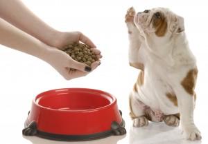 сухой корм для собаки