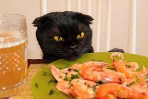 кот не хочет есть