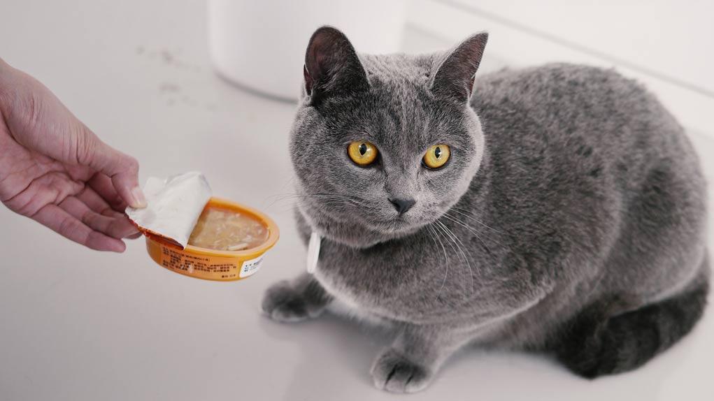 кошка отказывется от еды