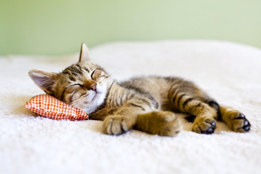 лежанка матрасик и подушка