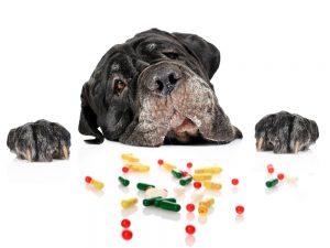 Лучшие витамины для вашей собаки