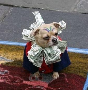 Сколько мы тратим на домашних животных? Немного статистики из США