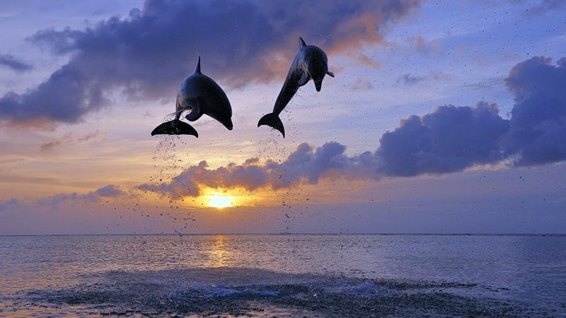 два дельфина красивое небо