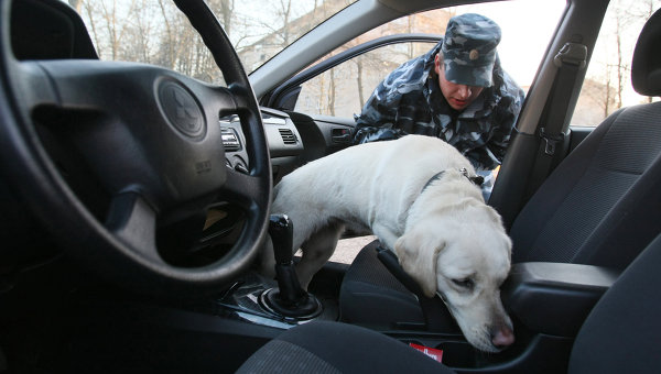 досмотр машины собакой