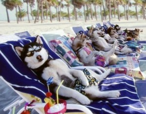 собаки на отдыхе