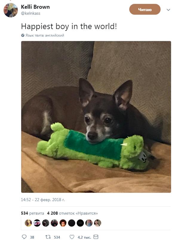 счастливый пес Бэби Джей с новой игрушкой
