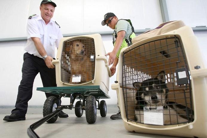 перелет собак в грузовом отсеке