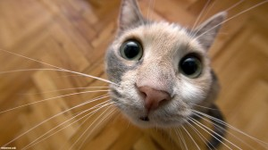 кошкина мордочка