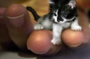 самый маленький котенок в мире