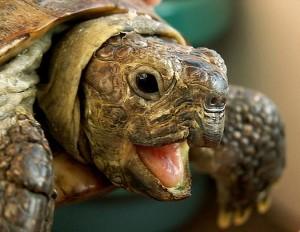 черепаха сильверстоун - 2 миллиона долларов