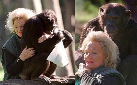 шимпанзе калу-самая богатая обезьяна