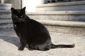 тинкер-богатый кот