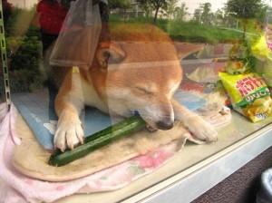 Сузуки - собака-продавец