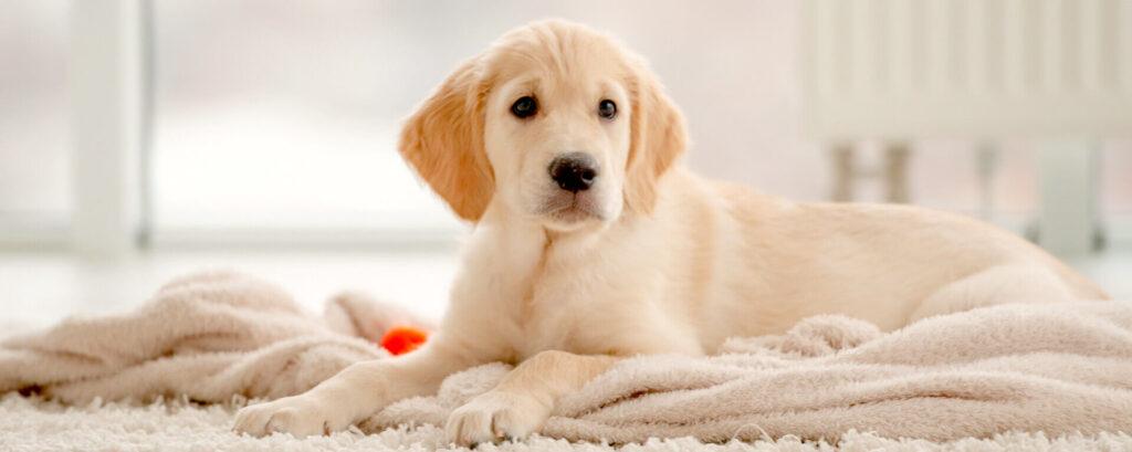 щенок на полотенце