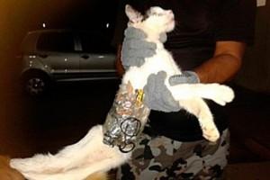 кошка с мобильниками