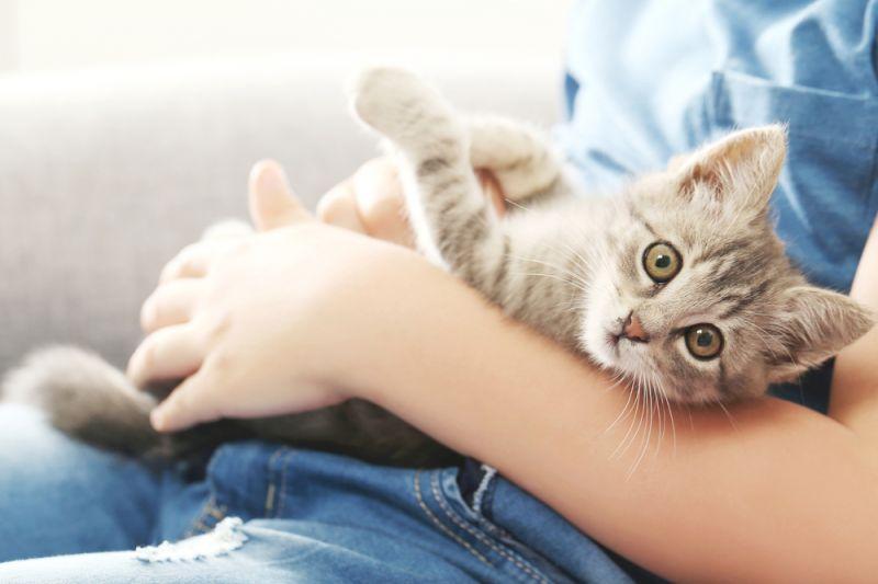 возраст кастрации котенка