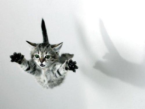 котенок в свободном падении
