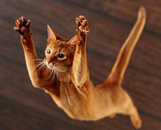 Высотный синдром кошек и почему у кошки 9 жизней