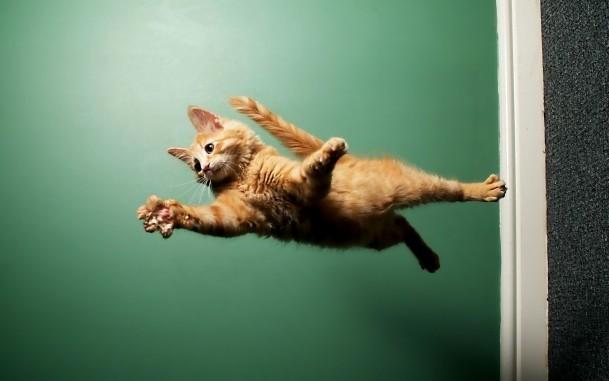 рыжий кот в полете