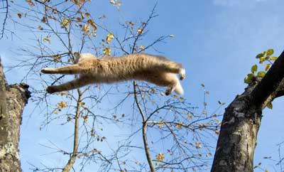 кот летит