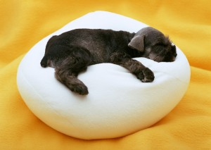 щенок на пуфе