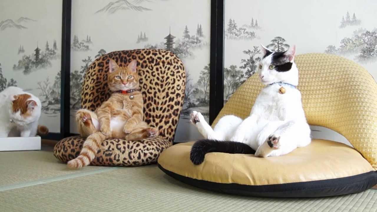 кошки на пуфах