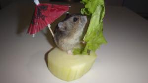 Буся на овощном корабле