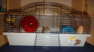 Фото джунгарика Буси в ее новой клетке